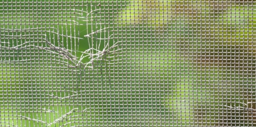 Check Your Window Screens Regularly